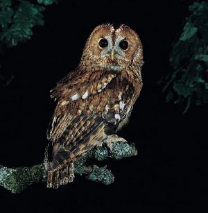 Allocco visto di notte