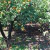 Agrumeto a Sant'Egidio del Monte Albino, foto MRS